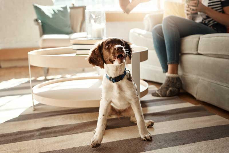 dog-on-cotton-rug